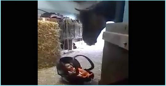 Малыша оставили под присмотром лошади. Как она себя повела?